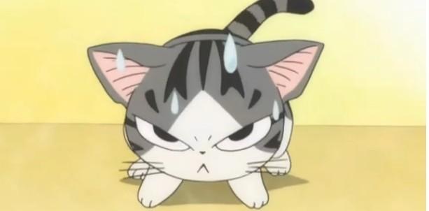 起司猫,又萌又淘气图片