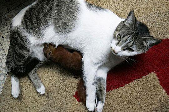 小松鼠和猫妈妈