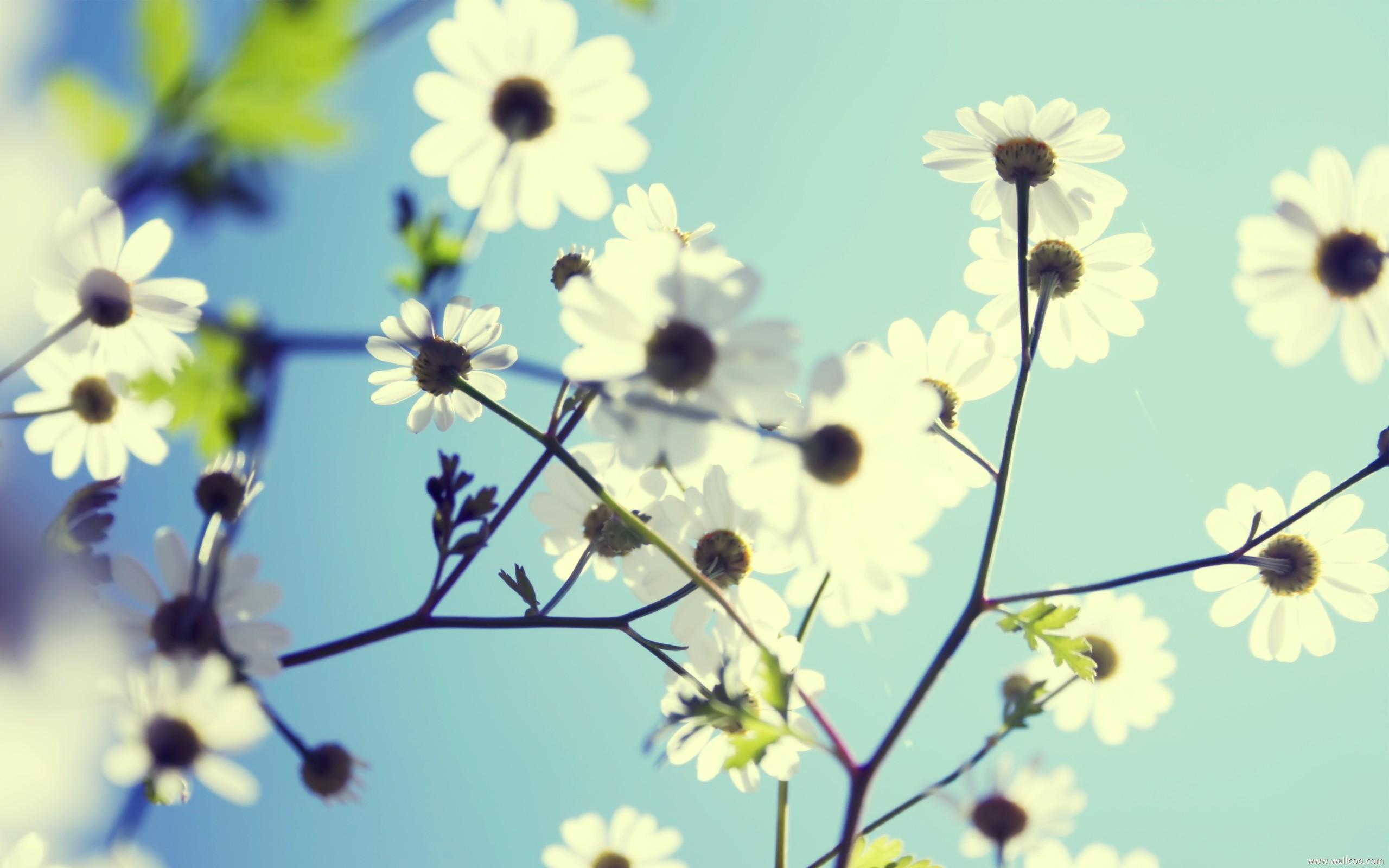 高清精美花卉壁纸[33p][无水印]