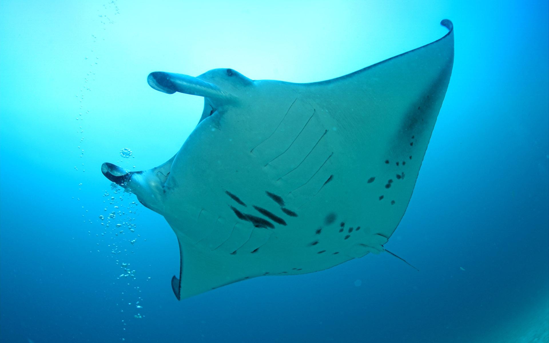 瑰丽多彩的海底世界高清壁纸[100p]