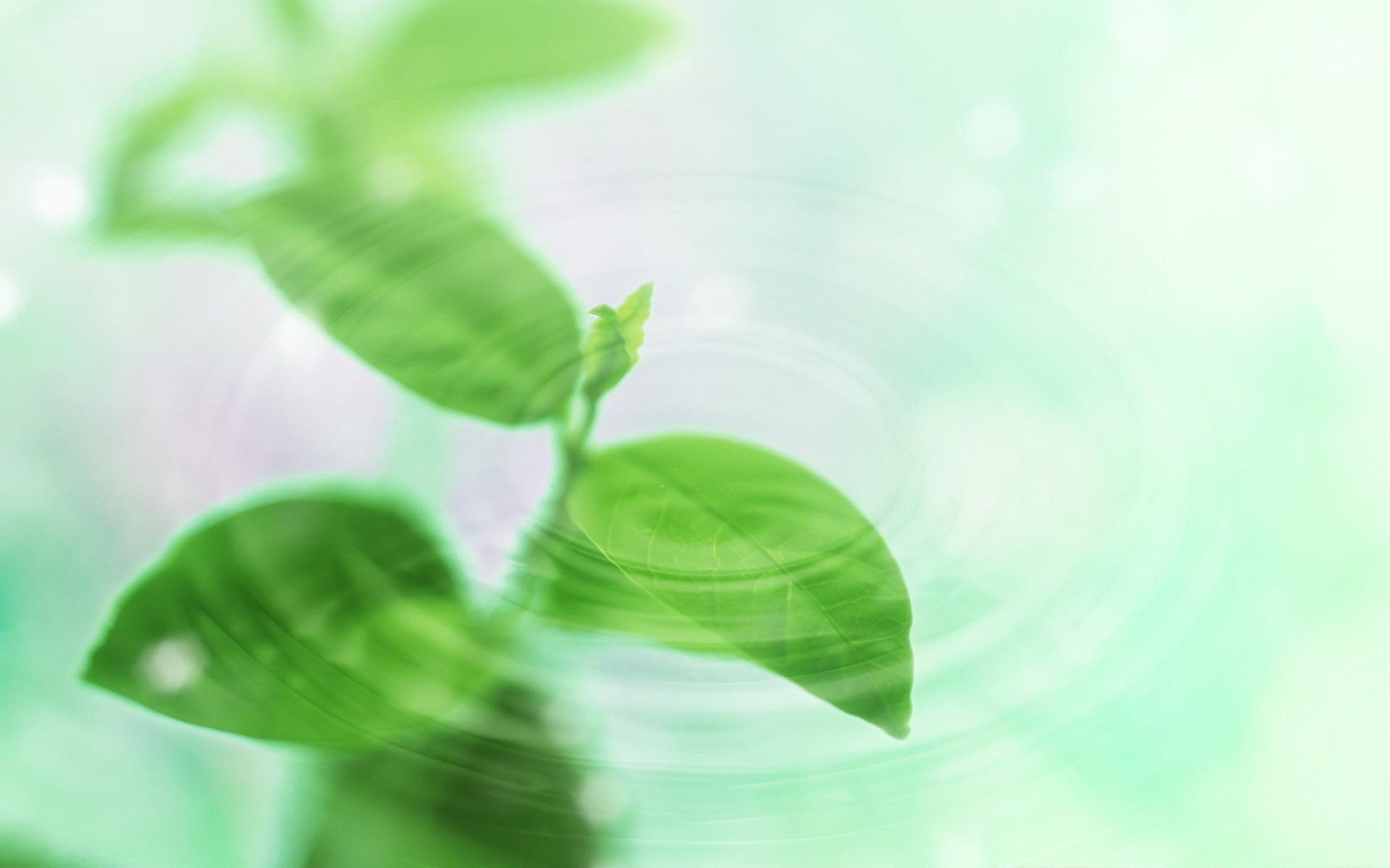 ppt 背景 壁纸 电脑桌面 发芽 绿色 绿色植物 绿叶 嫩芽 嫩叶 树叶 新