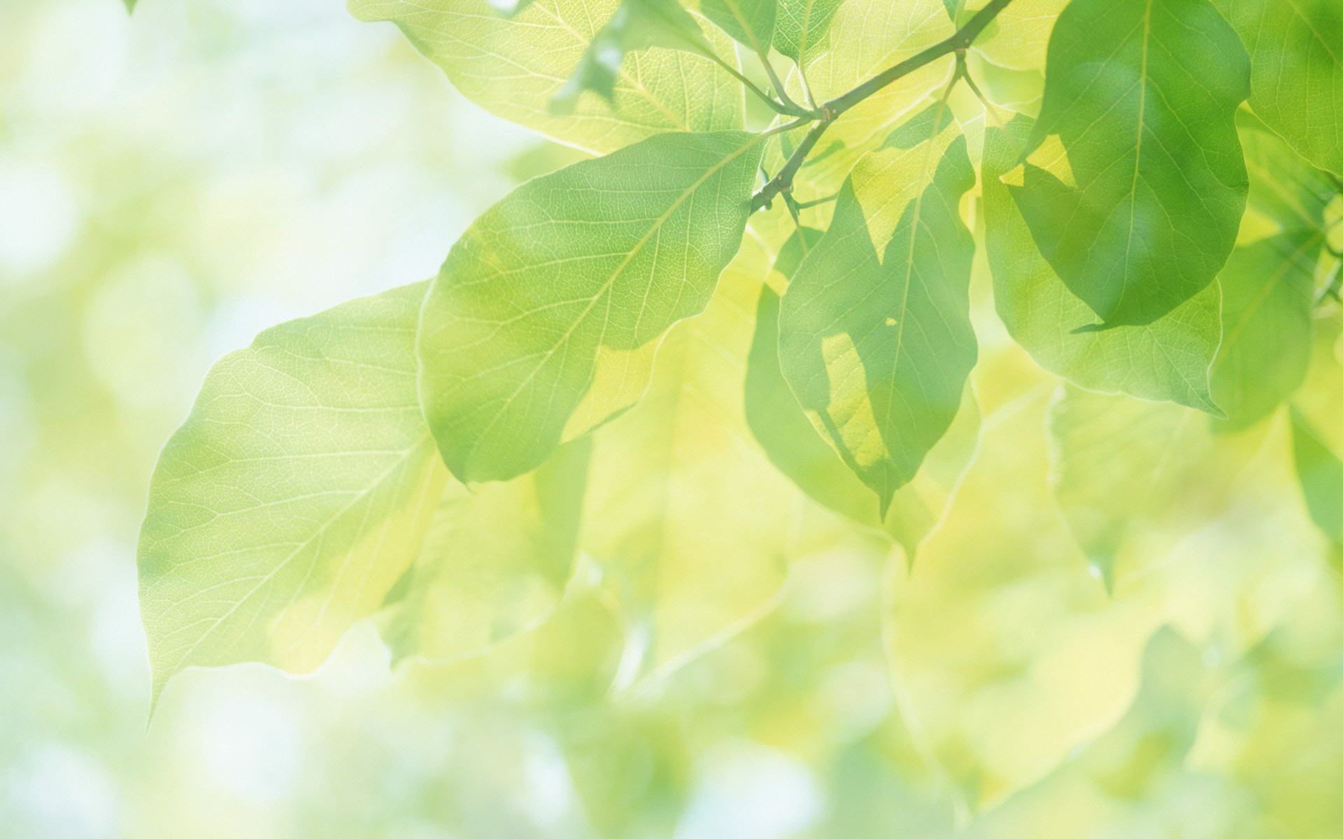 绿色风景植物高清壁纸[50p]