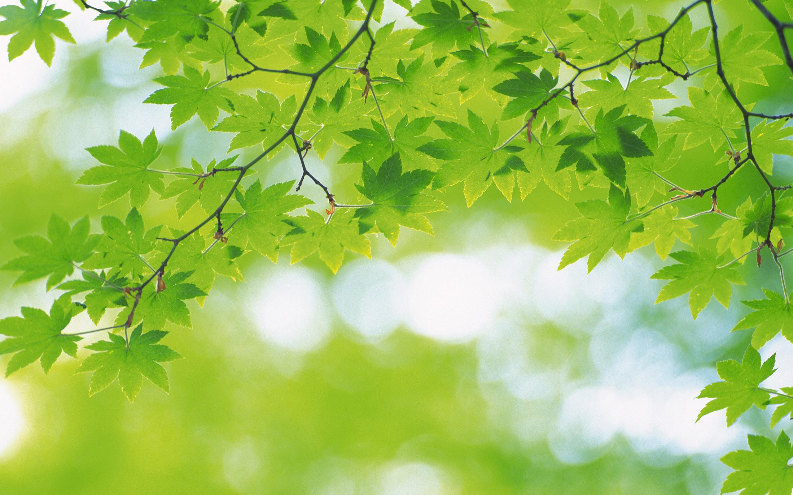 绿色植物叶子高清壁纸(2560x1600)[43p]