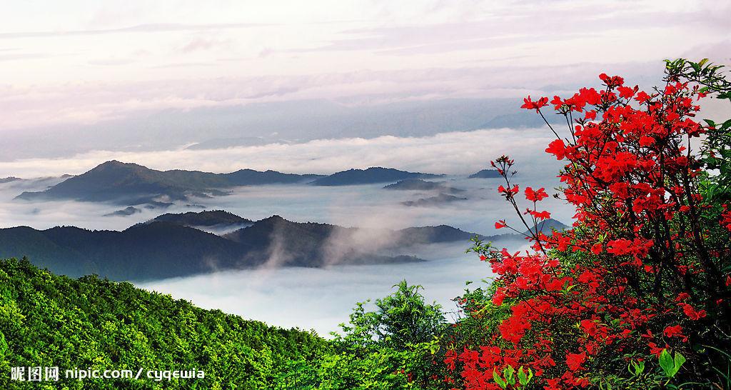 牡丹花照片和风景照片
