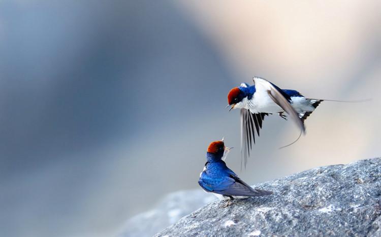 春天到了,鸟儿来了【极品美图】