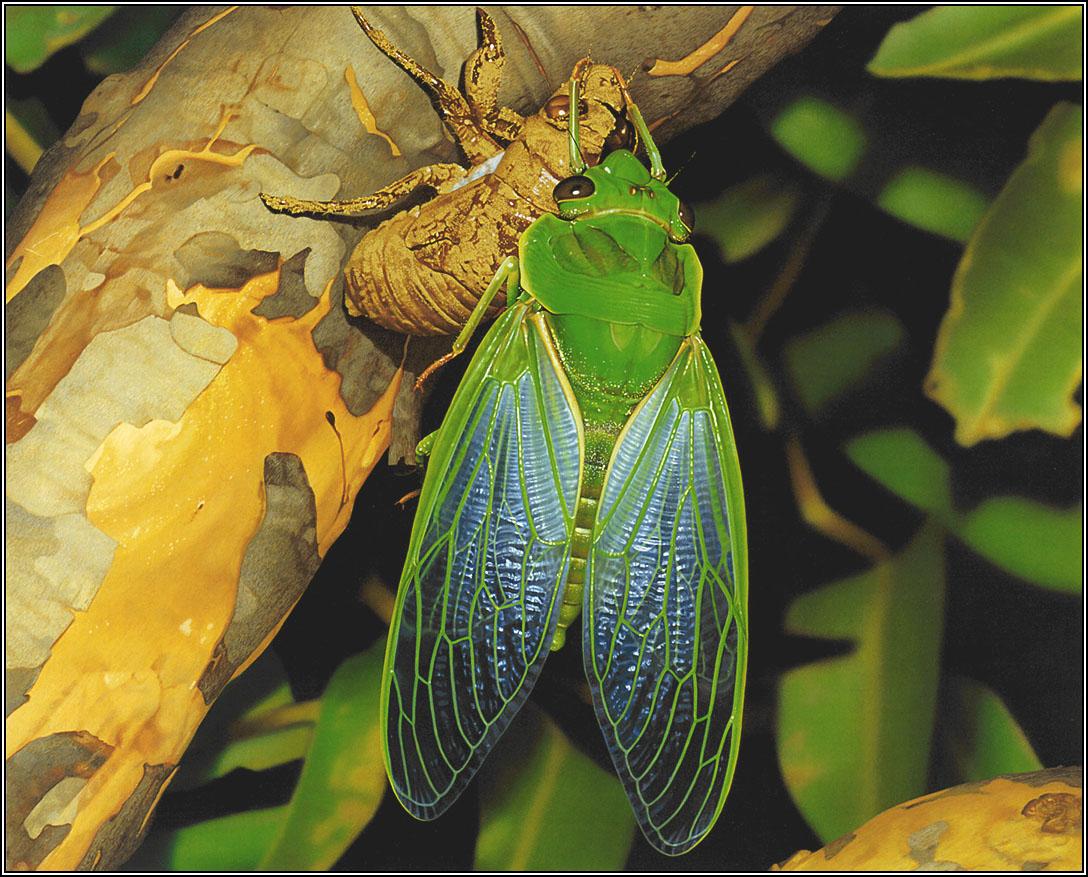 澳洲地理杂志手绘动物年历06-07_36p