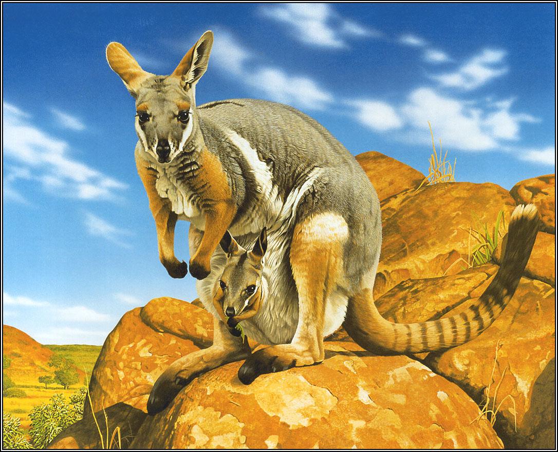 澳洲地理杂志手绘动物年历06-07