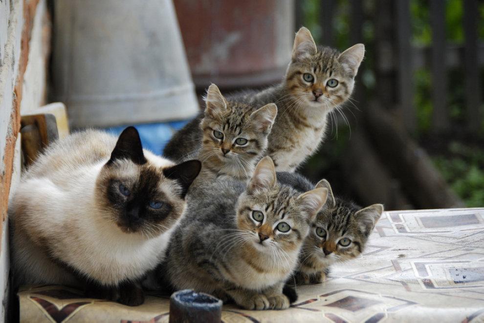 壁纸 动物 猫 猫咪 小猫 桌面 990_662