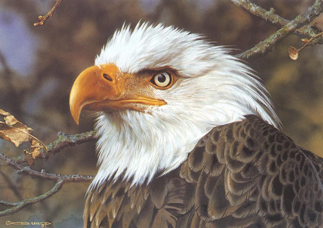 brenders写实动物绘画