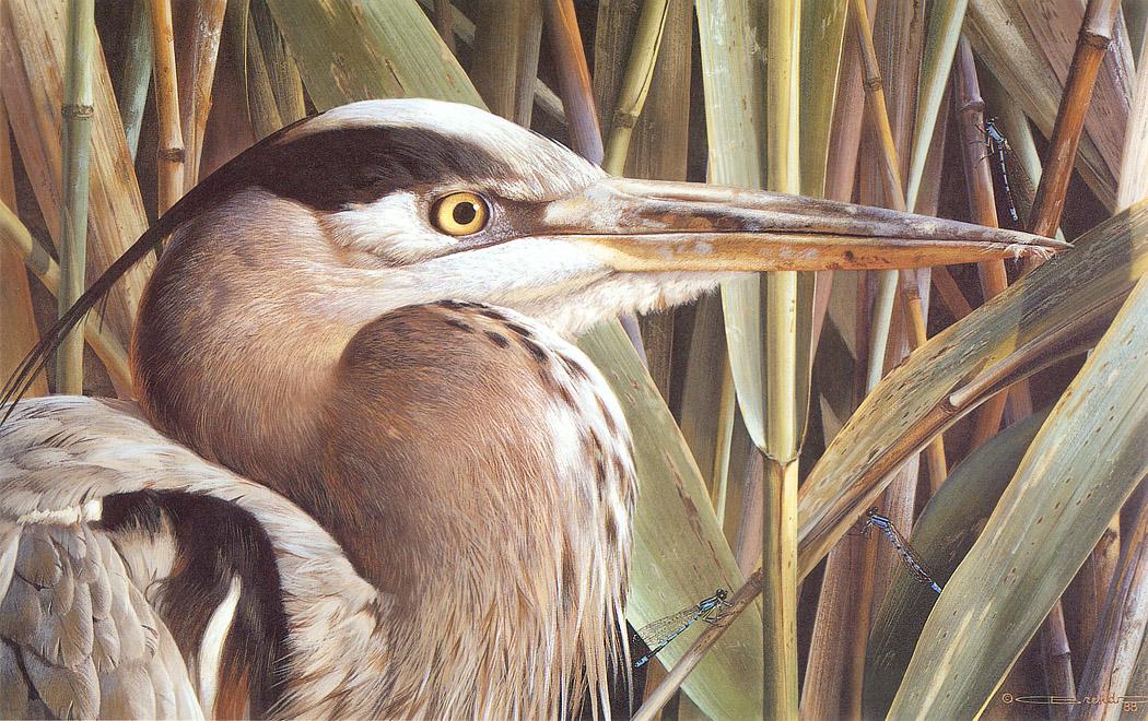 Carl Brenders出生于比利时的安特卫普(Antwerp)近郊,在安特卫普的Fine Arts Academy接受美术训练,他使用水彩与粉彩为《The Secret Life of Animals》丛书绘制插图,他所绘制的野生动物(wildlife)以宛若照片般栩栩如生而极富盛名。他一共出了20本有关野生动物的画册动物的秘密生活 -- The Secret Life of Animals。 Brenders 的作品鸟的艺术收藏在Leigh Yawkey Woodson 艺术博物馆。1987年他作