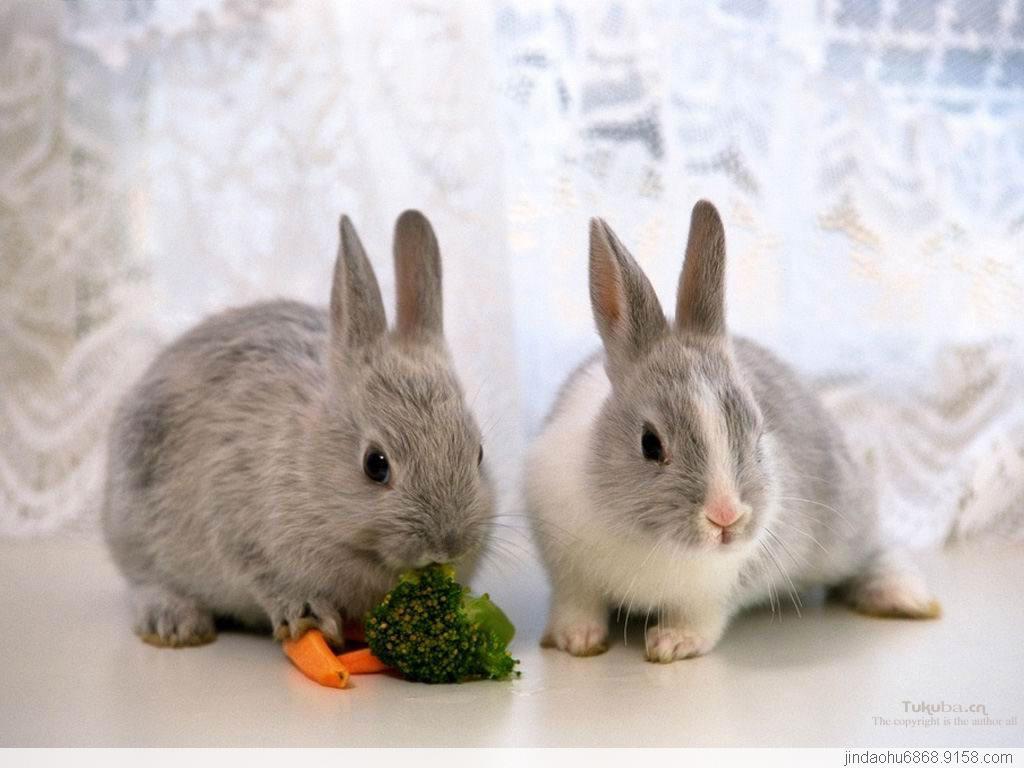 壁纸 动物 兔子 1024_768