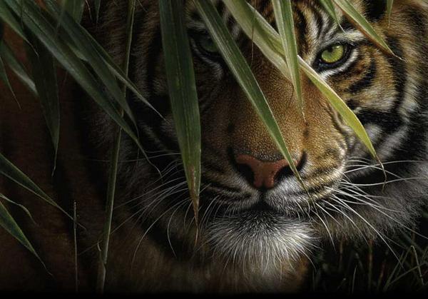 精美极至的野生动物绘画